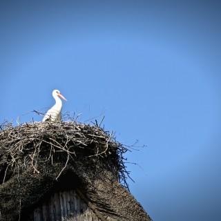 Endlich!!! der Storch ist da.